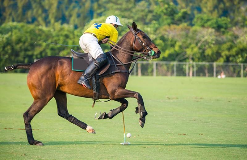 club équitation