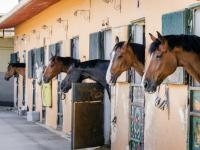 Box chevaux individuels